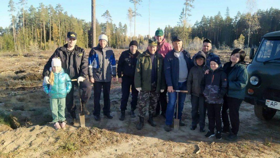 """Во время акции """"Чистый лес"""" саженцы сосны посадили на площади два гектара"""